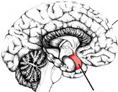 Beyin Ölümü